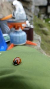 Ladybird visit!