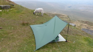 Set up on Ingleborough with sheep!